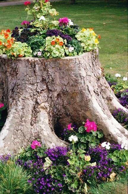 Best Tree Company Tallahassee Tree Service