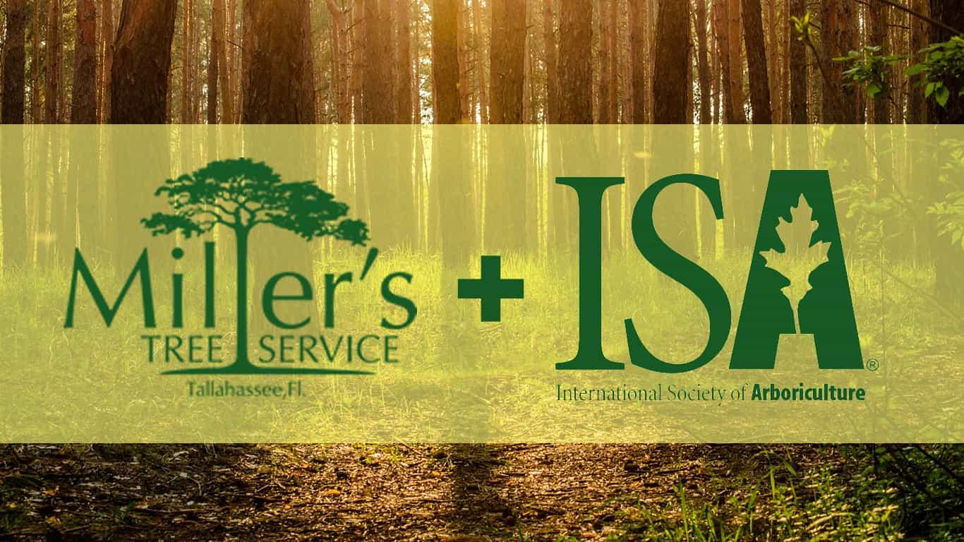 Miller's Tree Service + ISA Certified Arborists