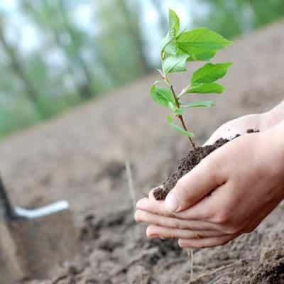 Planting Sapling