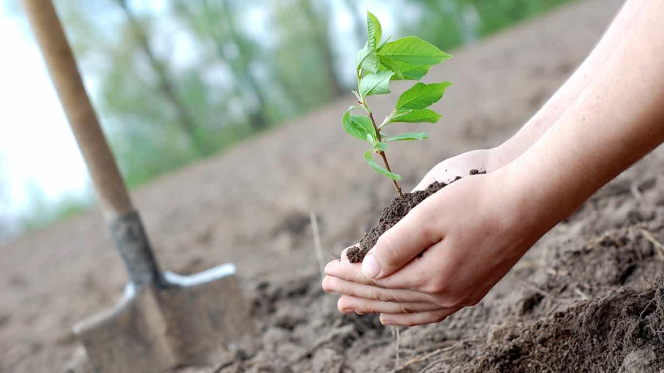 Planting SaplingBest Tree Company Tallahassee Tree Service